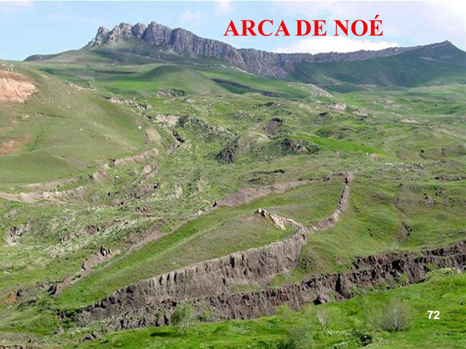 ARCA DE NOÉ 72