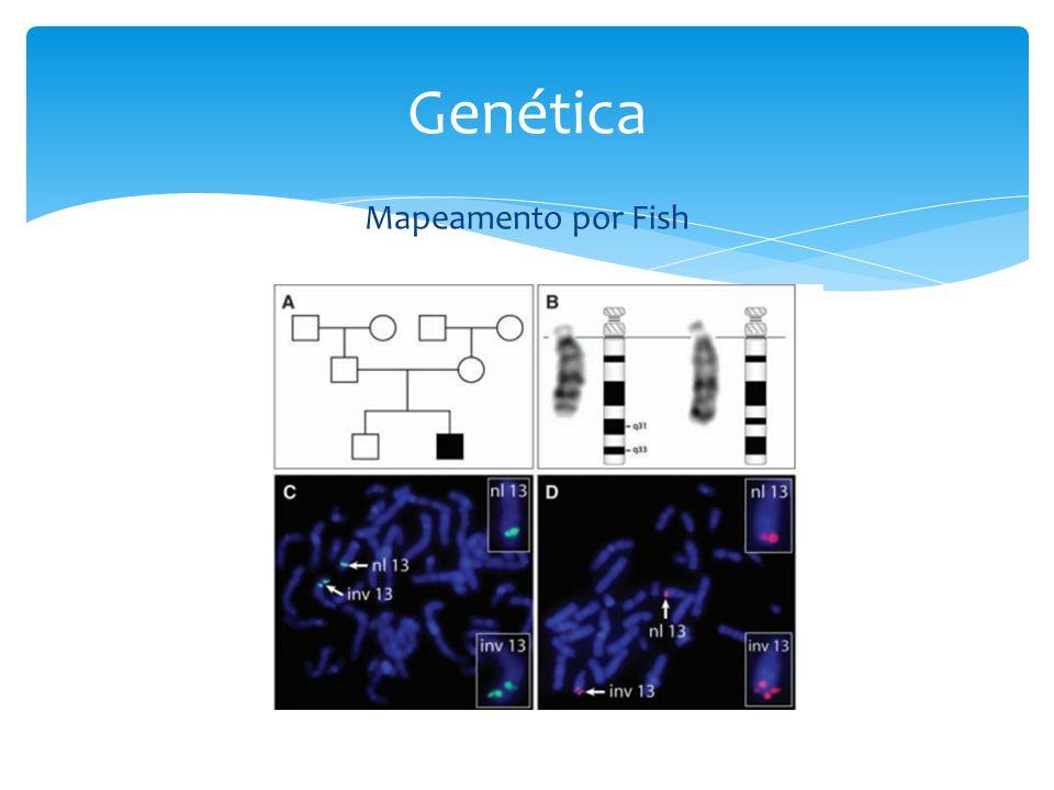 Genética Mapeamento por Fish