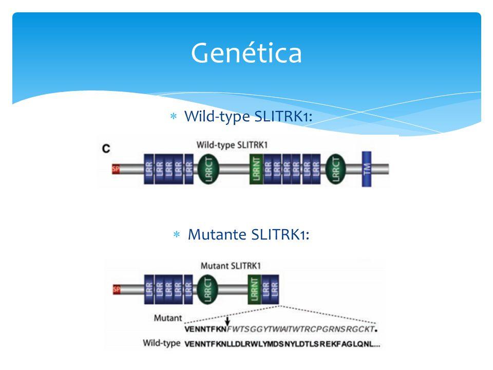 Genética Wild-type SLITRK1: Mutante SLITRK1:
