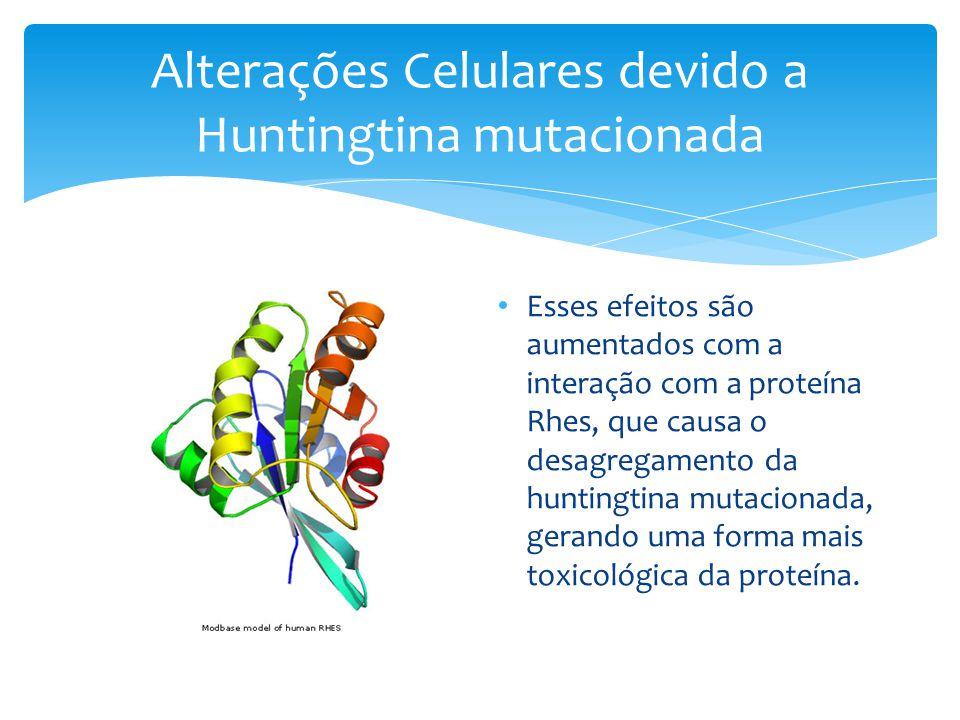 Alterações Celulares devido a Huntingtina mutacionada