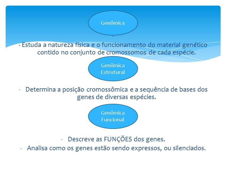 Descreve as FUNÇÕES dos genes.
