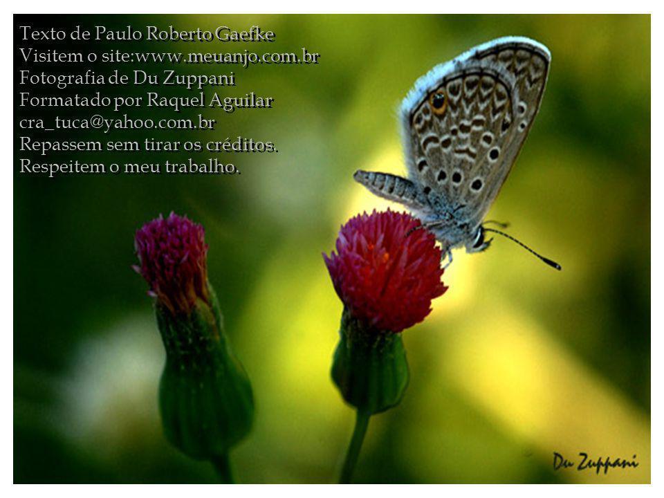 Texto de Paulo Roberto Gaefke