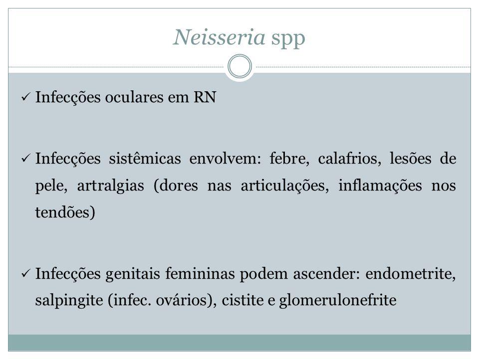 Neisseria spp Infecções oculares em RN