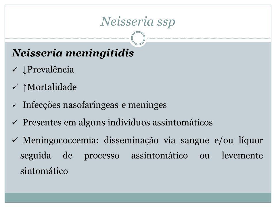 Neisseria ssp Neisseria meningitidis ↓Prevalência ↑Mortalidade