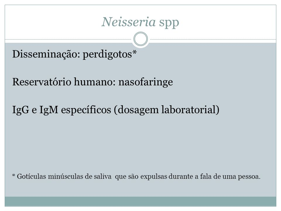 Neisseria spp Disseminação: perdigotos*