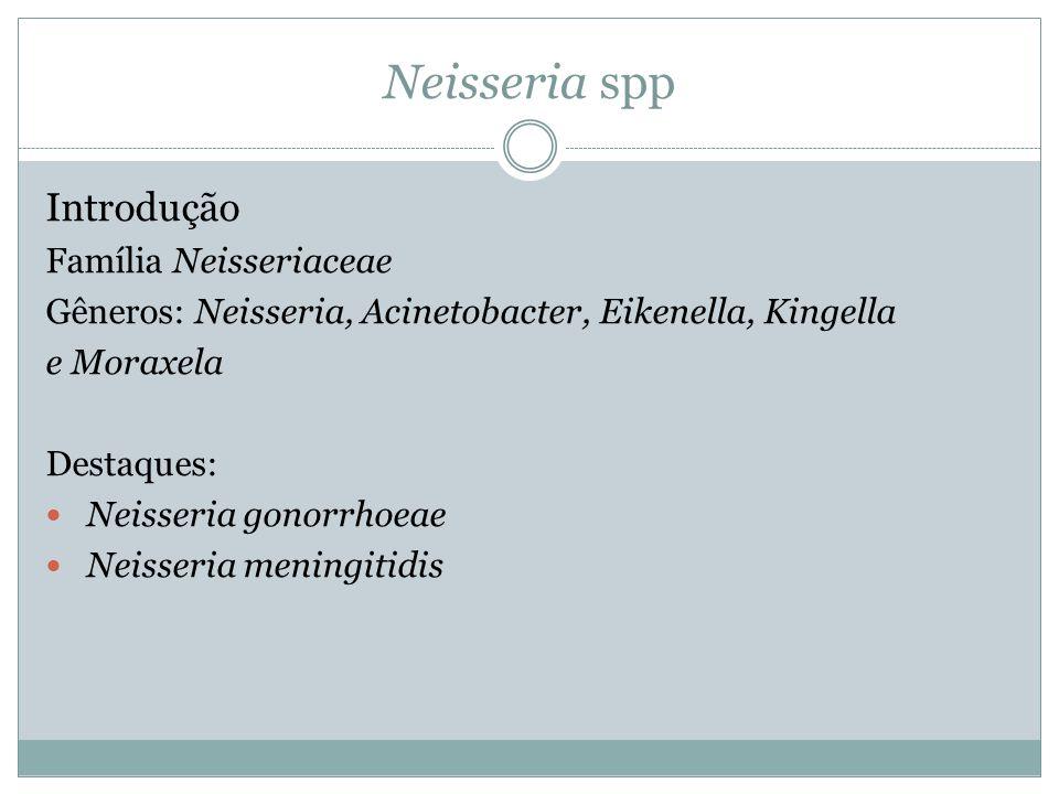 Neisseria spp Introdução Família Neisseriaceae