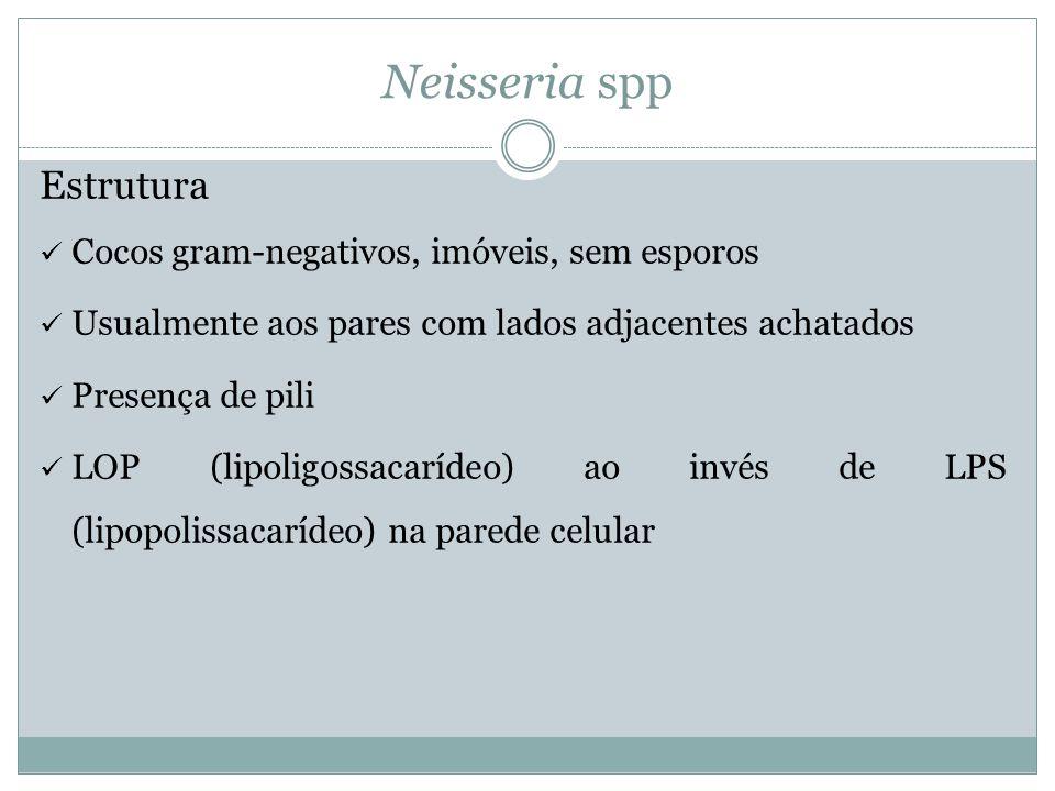 Neisseria spp Estrutura Cocos gram-negativos, imóveis, sem esporos
