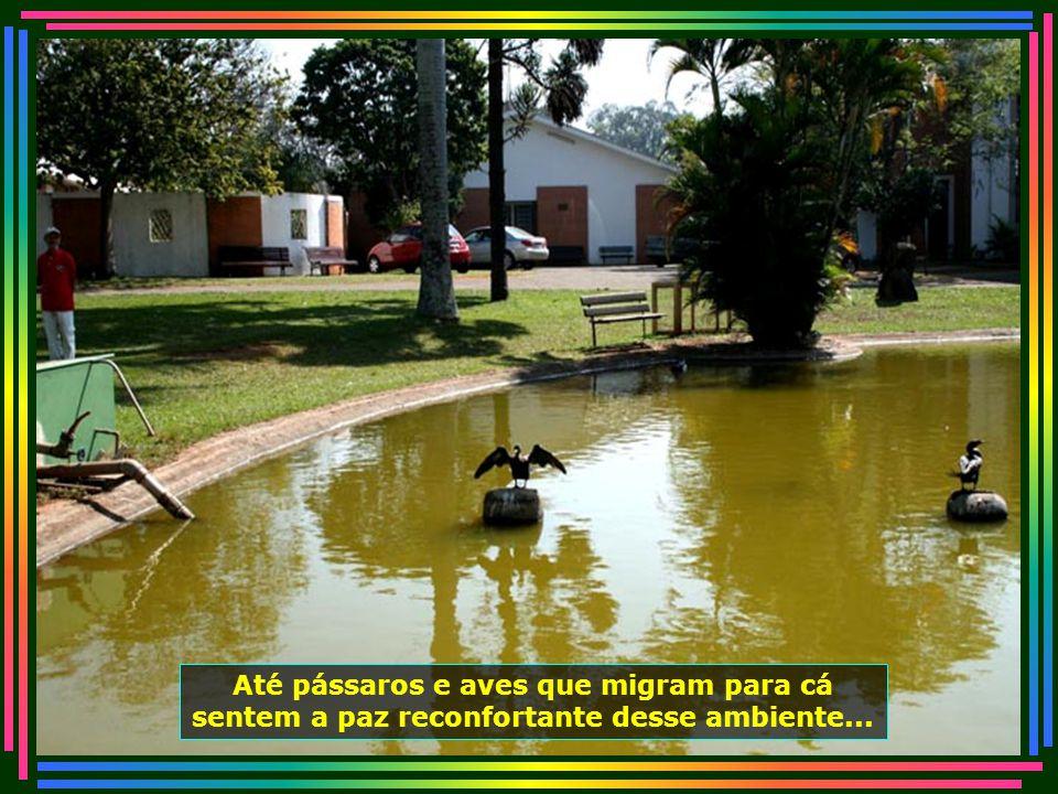 IMG_4983 - PIRACICABA - LAR DOS VELHINHOS - AVE NO LAGO-670
