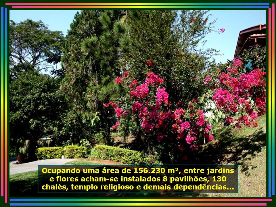IMG_5001 - PIRACICABA - LAR DOS VELHINHOS - FLORES-670