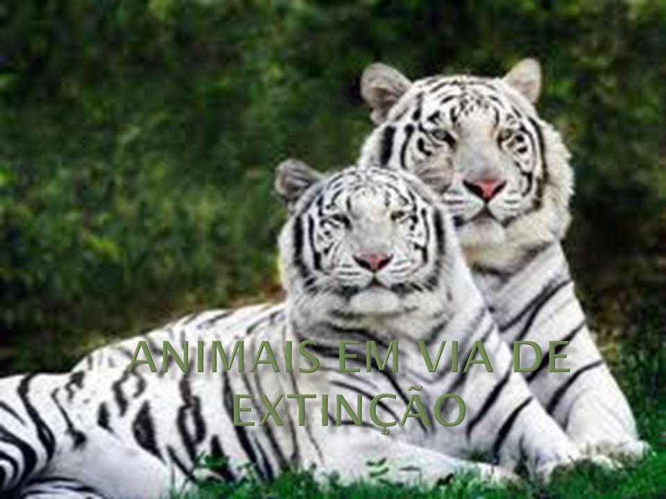 Animais em via de extinção