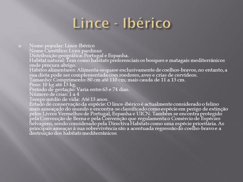 Lince - Ibérico