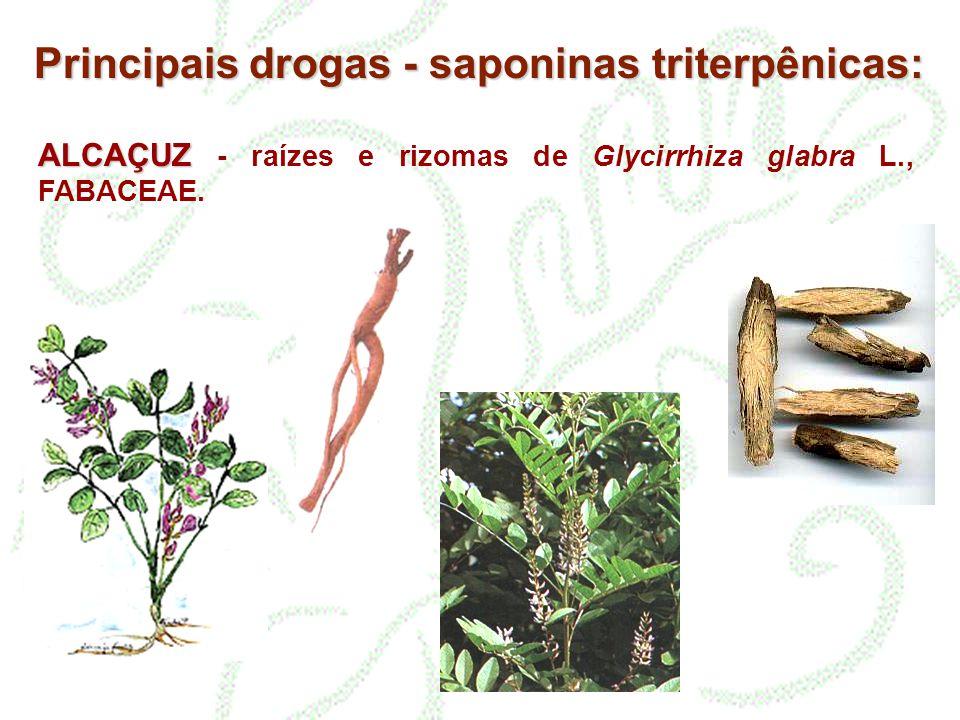 Principais drogas - saponinas triterpênicas: