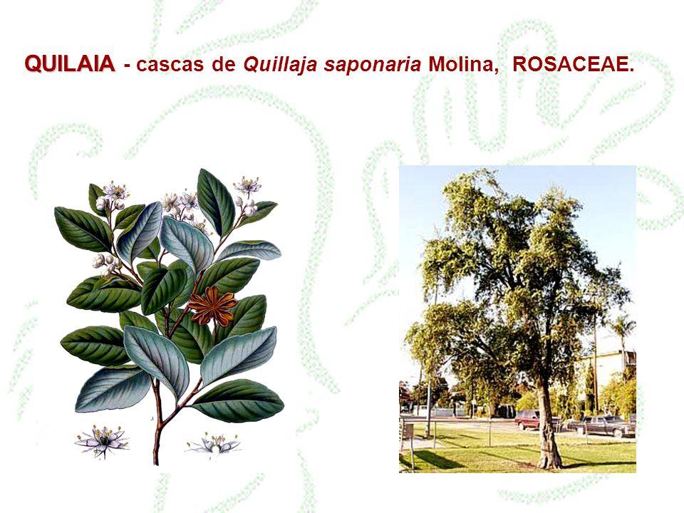 QUILAIA - cascas de Quillaja saponaria Molina, ROSACEAE.