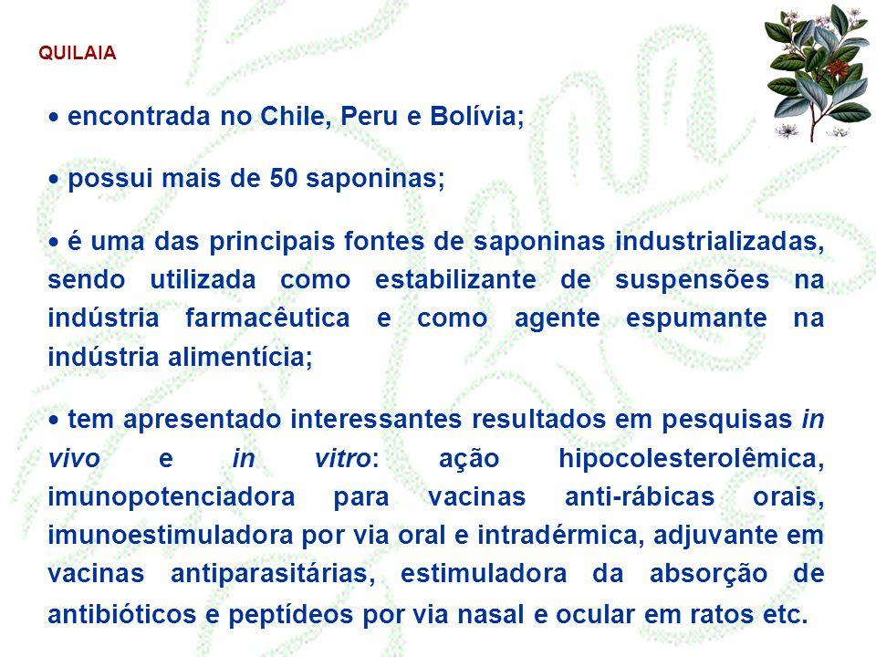 encontrada no Chile, Peru e Bolívia; possui mais de 50 saponinas;