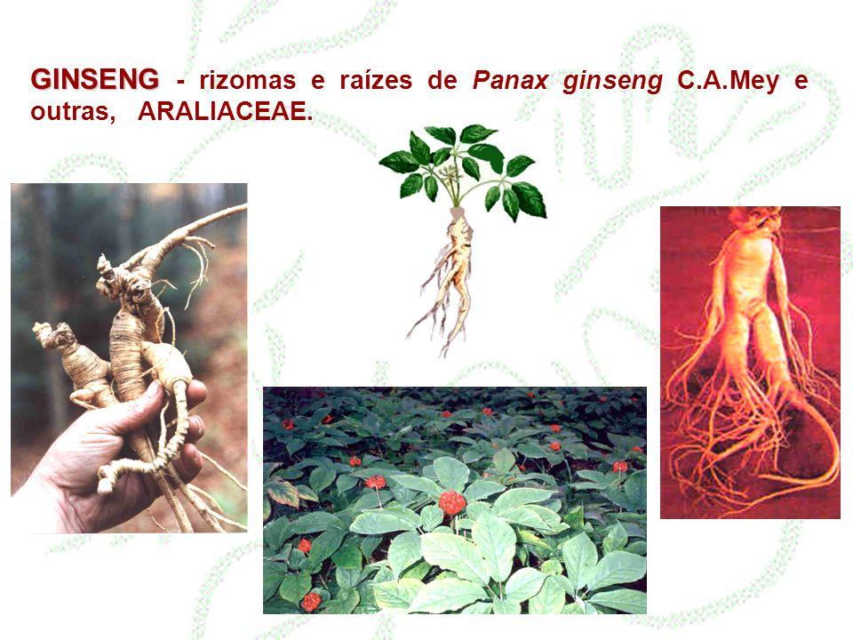 GINSENG - rizomas e raízes de Panax ginseng C. A