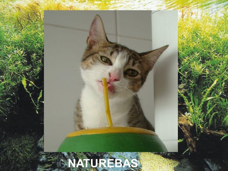 NATUREBAS
