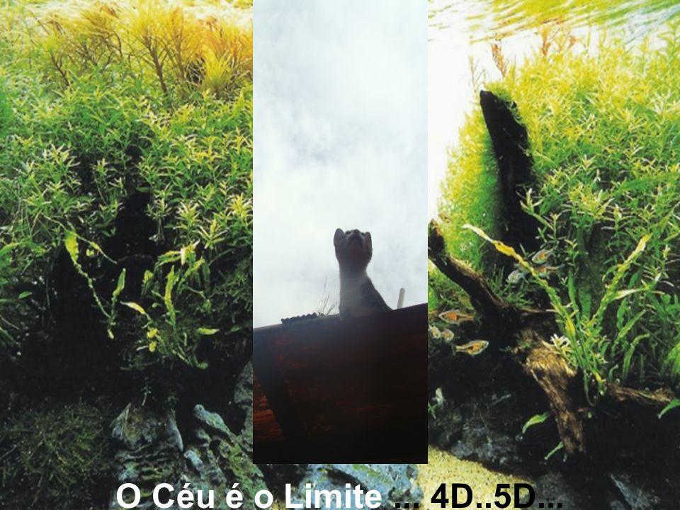O Céu é o Limite ... 4D..5D...