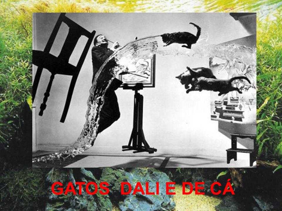 GATOS DALI E DE CÁ