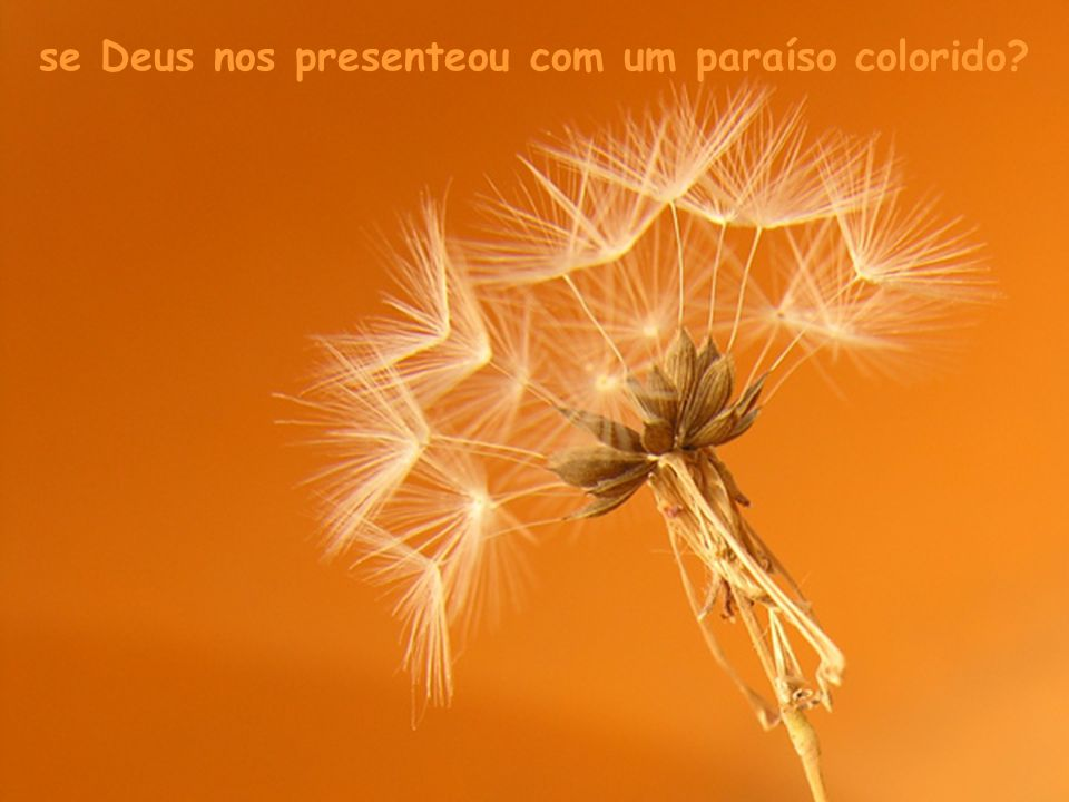 se Deus nos presenteou com um paraíso colorido
