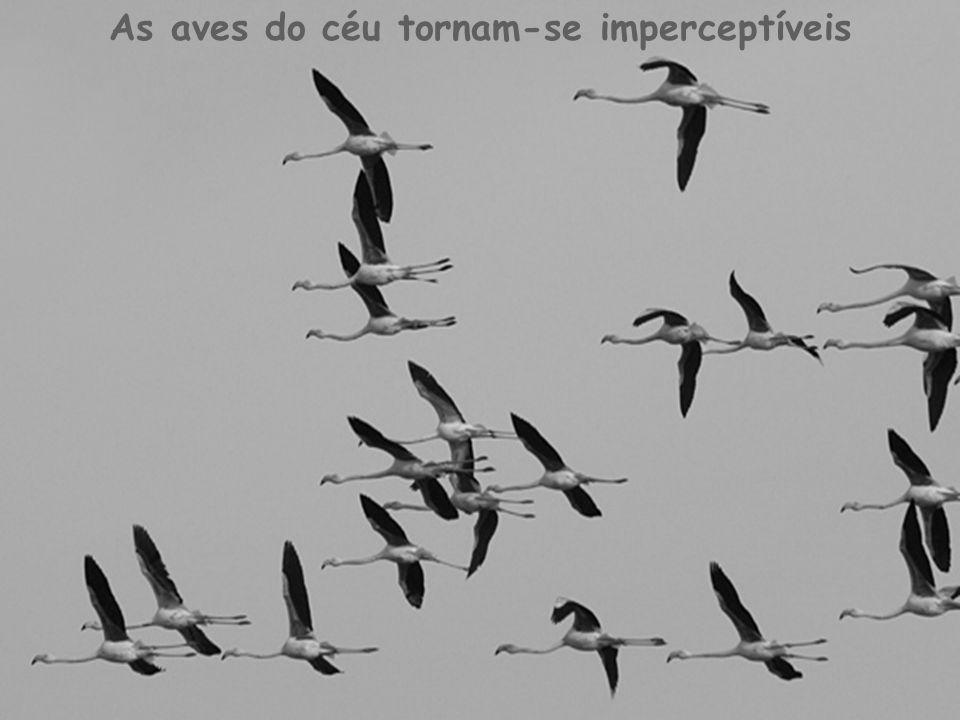 As aves do céu tornam-se imperceptíveis