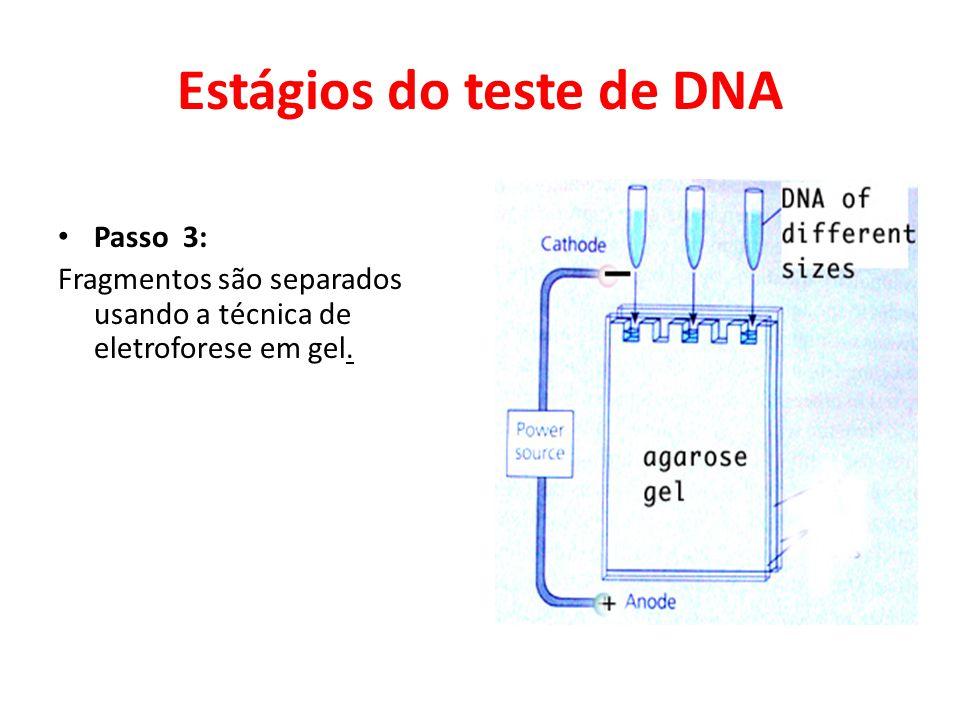 Estágios do teste de DNA