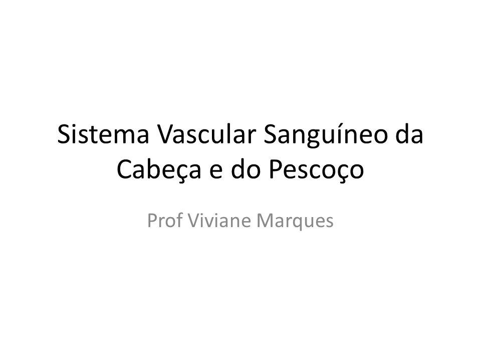 Sistema Vascular Sanguíneo da Cabeça e do Pescoço