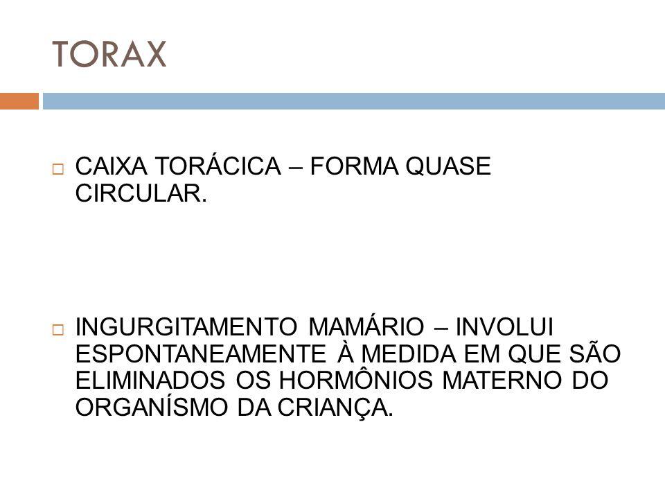 TORAX CAIXA TORÁCICA – FORMA QUASE CIRCULAR.