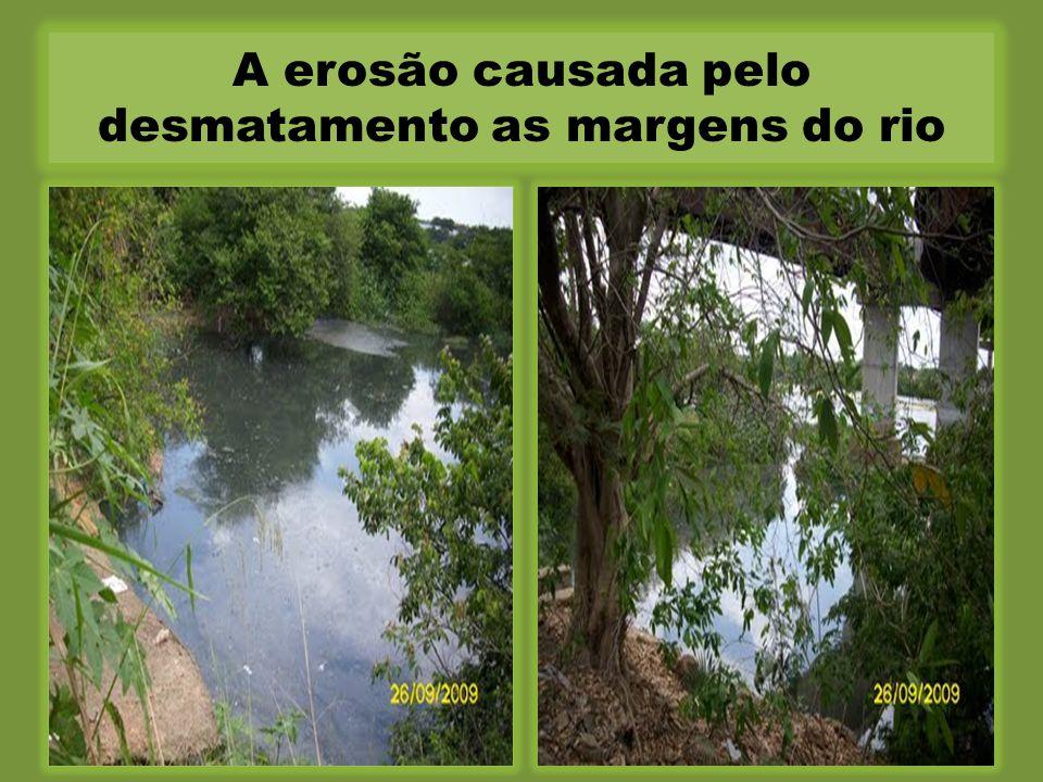 A erosão causada pelo desmatamento as margens do rio