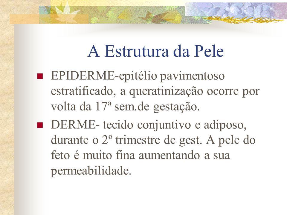 A Estrutura da Pele EPIDERME-epitélio pavimentoso estratificado, a queratinização ocorre por volta da 17ª sem.de gestação.