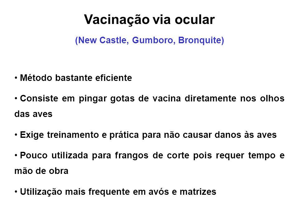 (New Castle, Gumboro, Bronquite)