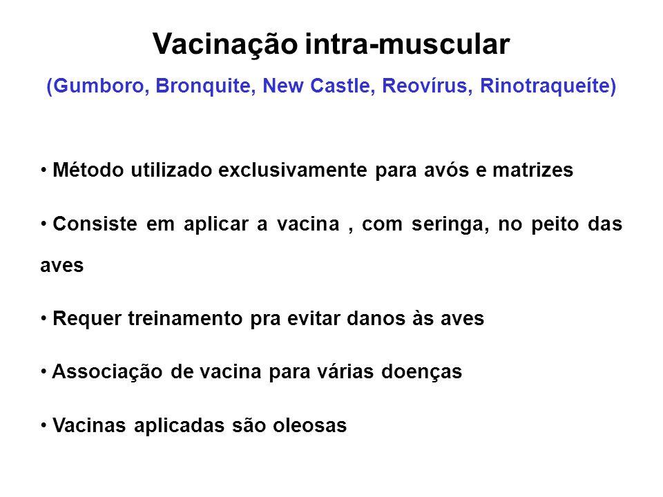 Vacinação intra-muscular