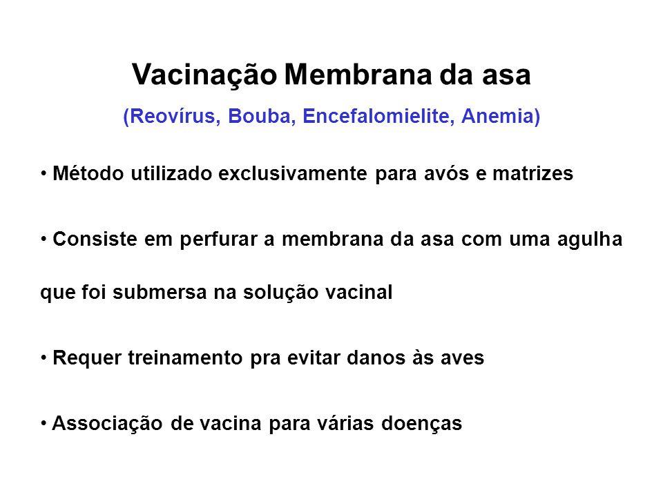 Vacinação Membrana da asa (Reovírus, Bouba, Encefalomielite, Anemia)