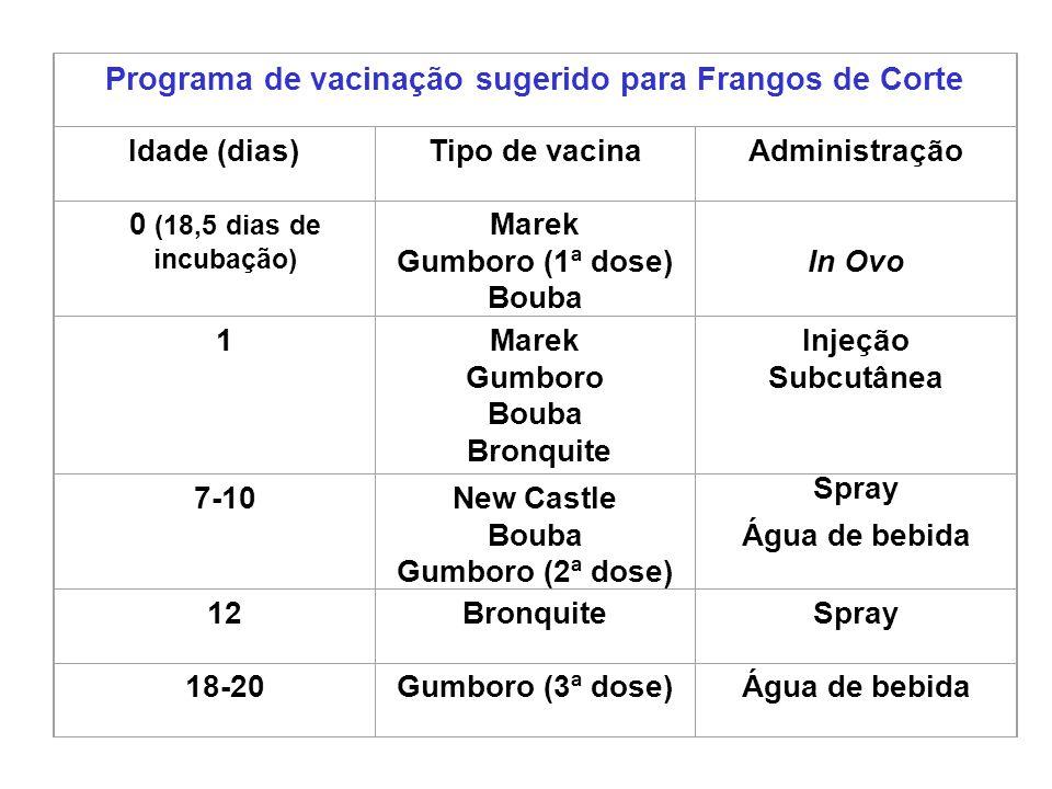 Programa de vacinação sugerido para Frangos de Corte
