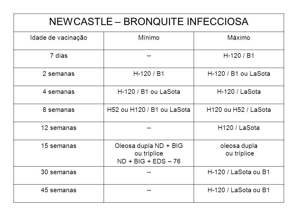 NEWCASTLE – BRONQUITE INFECCIOSA