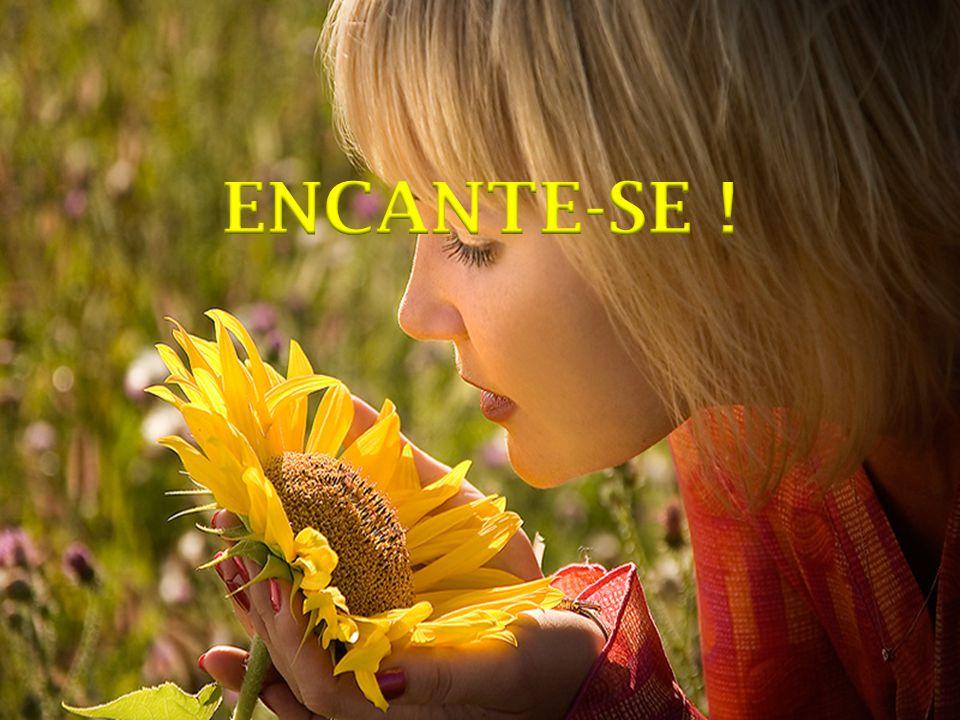 ENCANTE-SE !