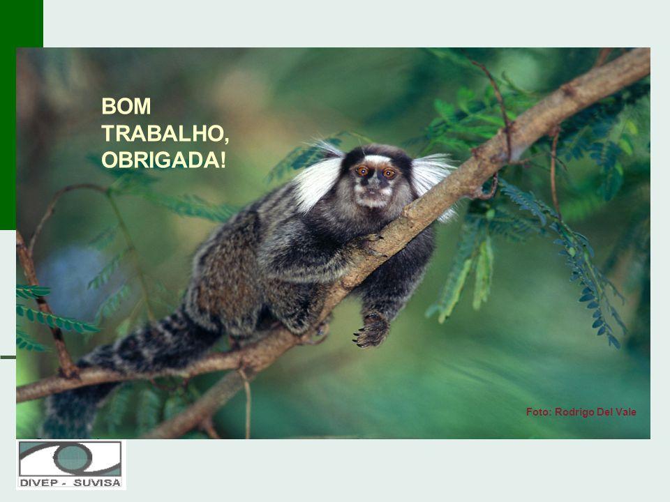 BOM TRABALHO,OBRIGADA! Foto: Rodrigo Del Vale