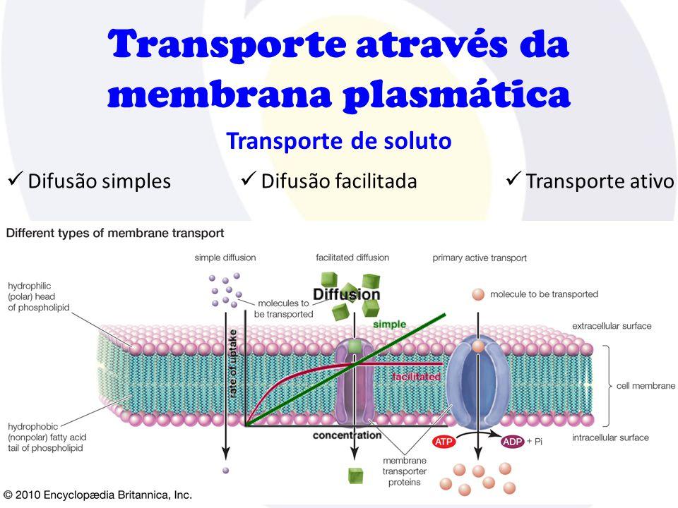 Transporte através da membrana plasmática Transporte de soluto