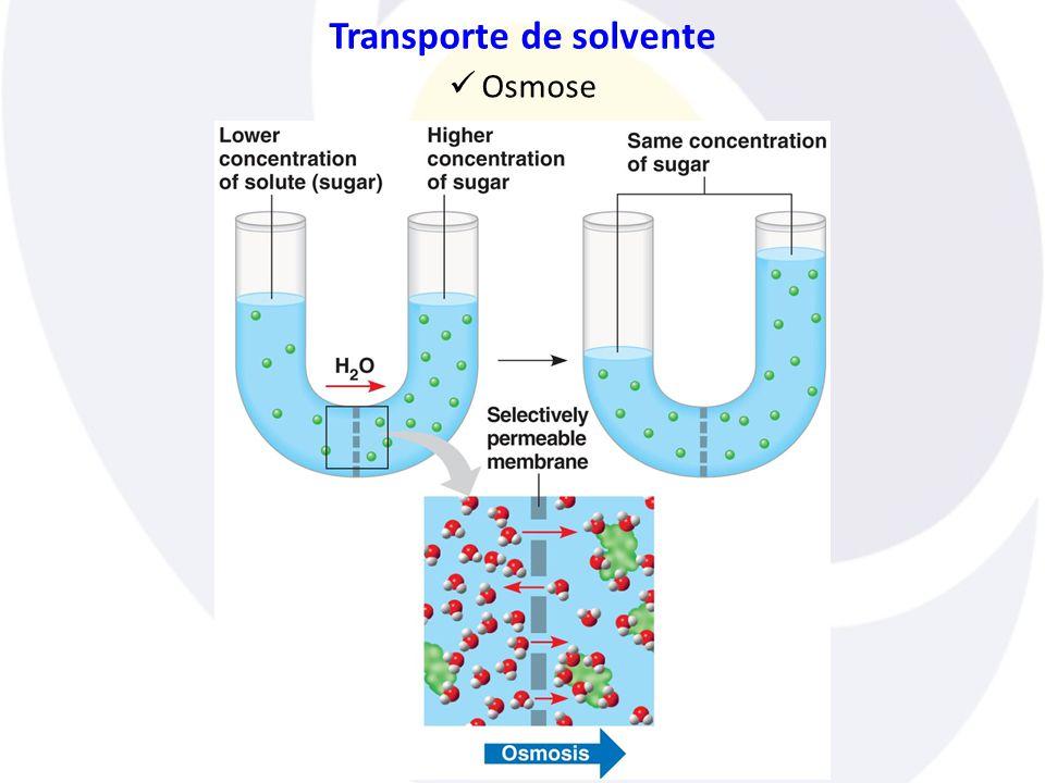 Transporte de solvente