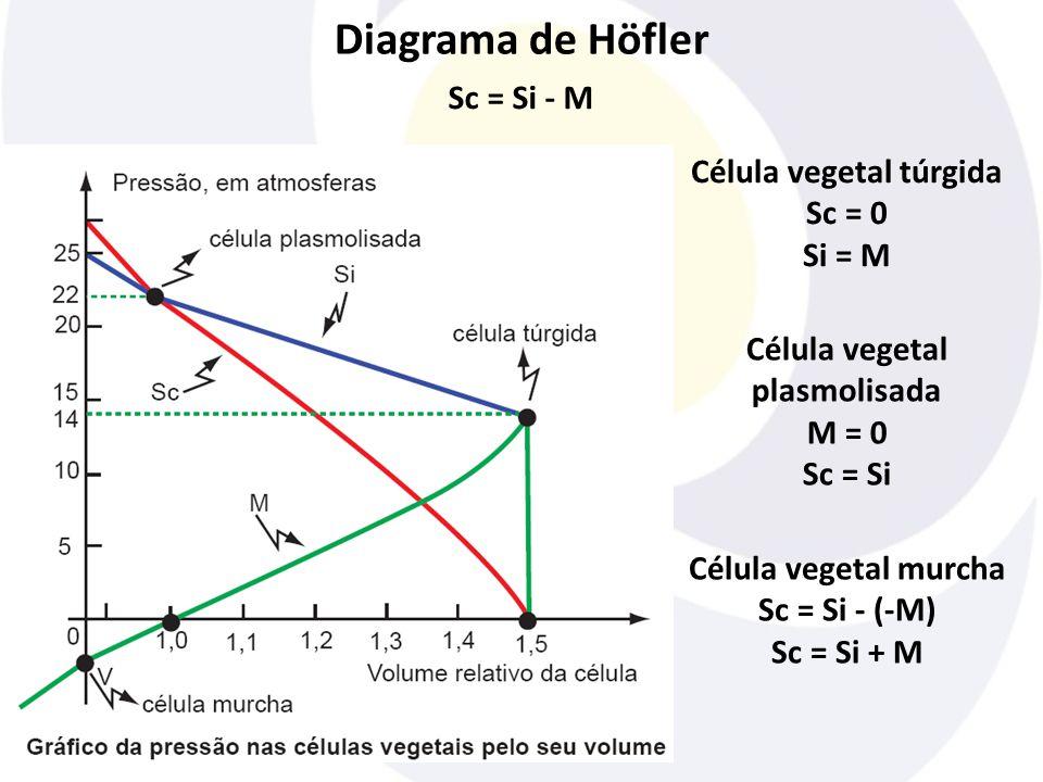 Célula vegetal túrgida Célula vegetal plasmolisada