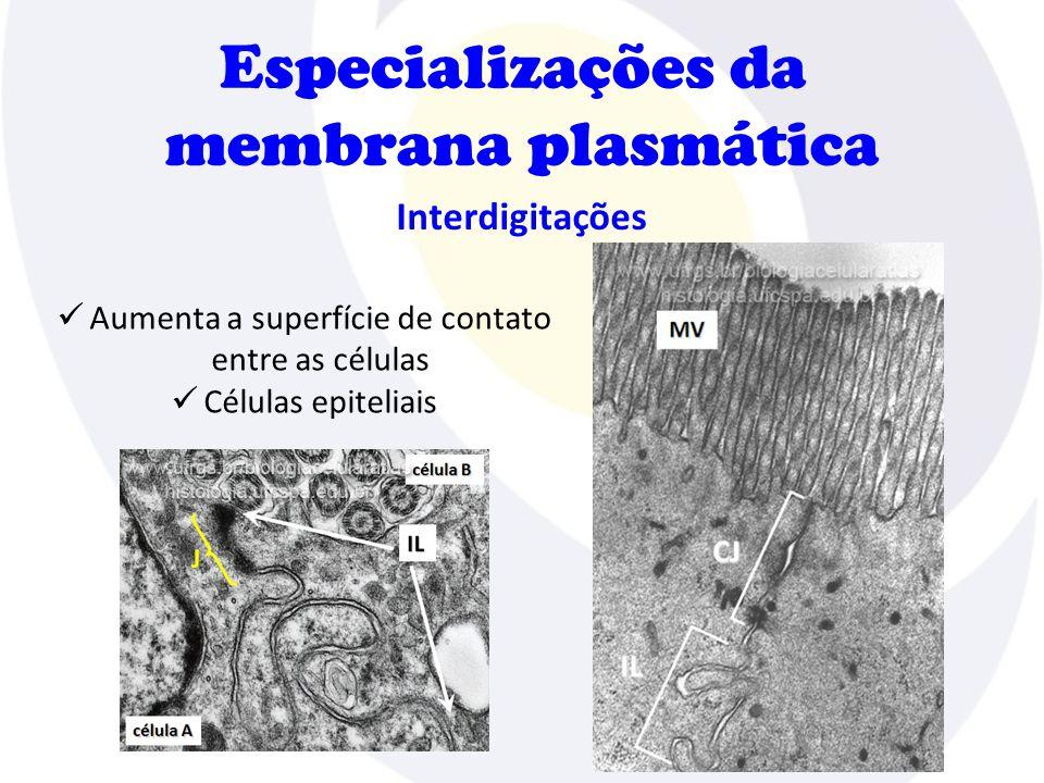Aumenta a superfície de contato entre as células