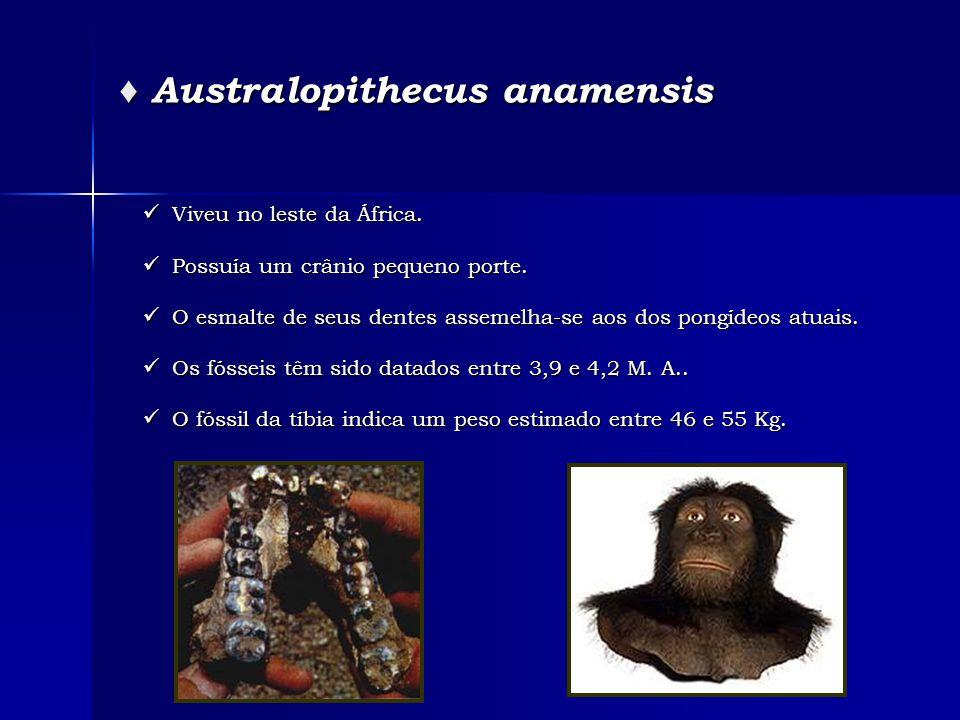 ♦ Australopithecus anamensis