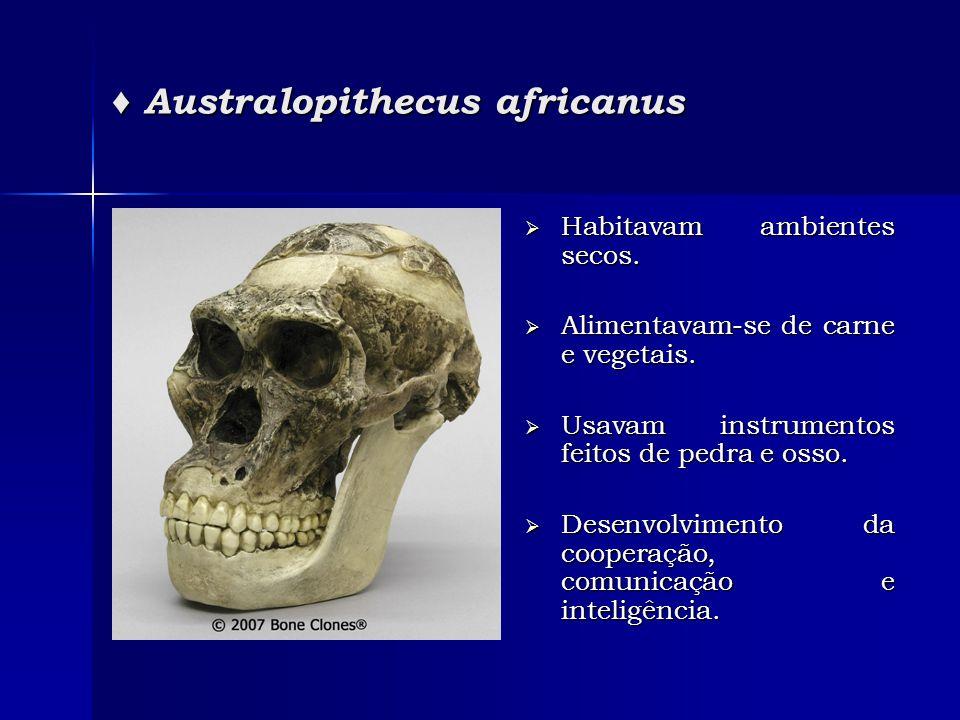 ♦ Australopithecus africanus