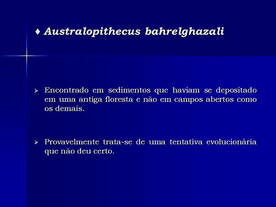♦ Australopithecus bahrelghazali