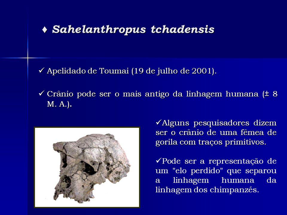 ♦ Sahelanthropus tchadensis