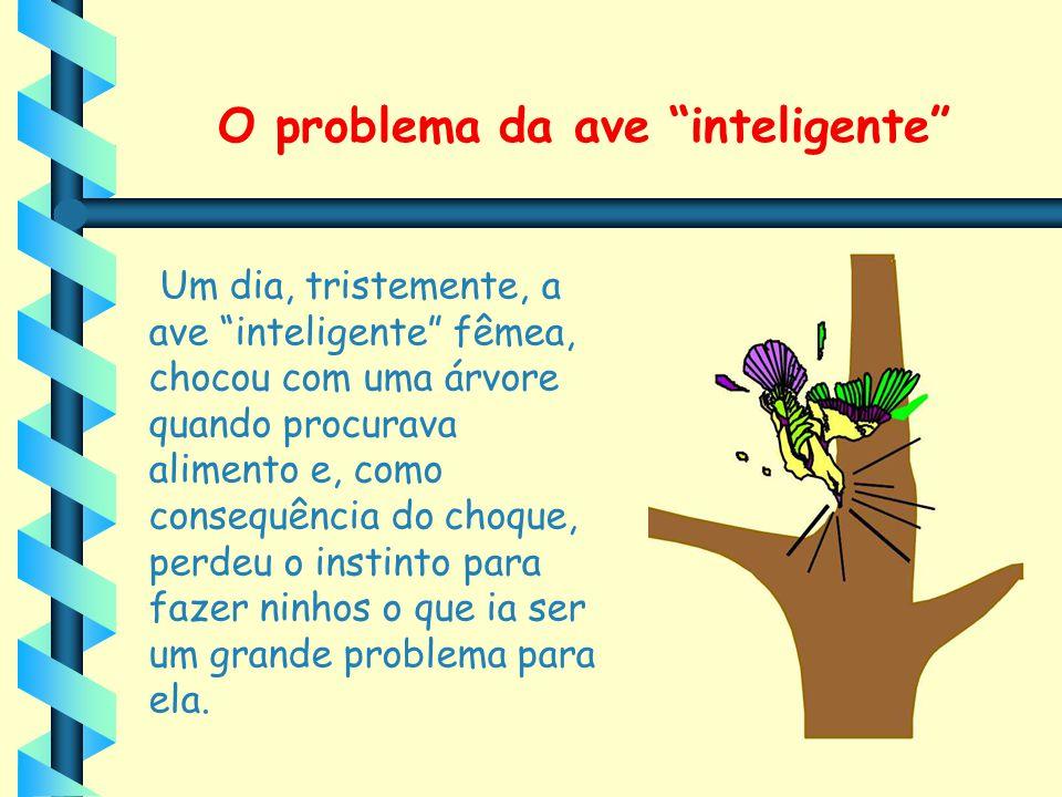 O problema da ave inteligente