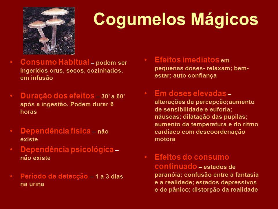 Cogumelos Mágicos Efeitos imediatos em pequenas doses- relaxam; bem-estar; auto confiança.