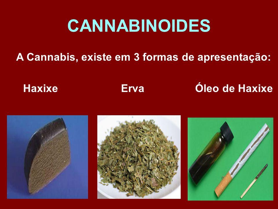 CANNABINOIDES A Cannabis, existe em 3 formas de apresentação: