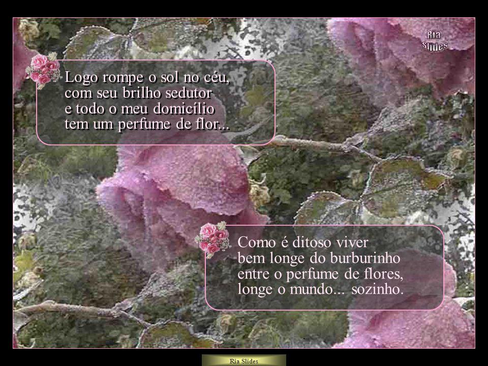 Logo rompe o sol no céu, com seu brilho sedutor e todo o meu domicílio tem um perfume de flor...
