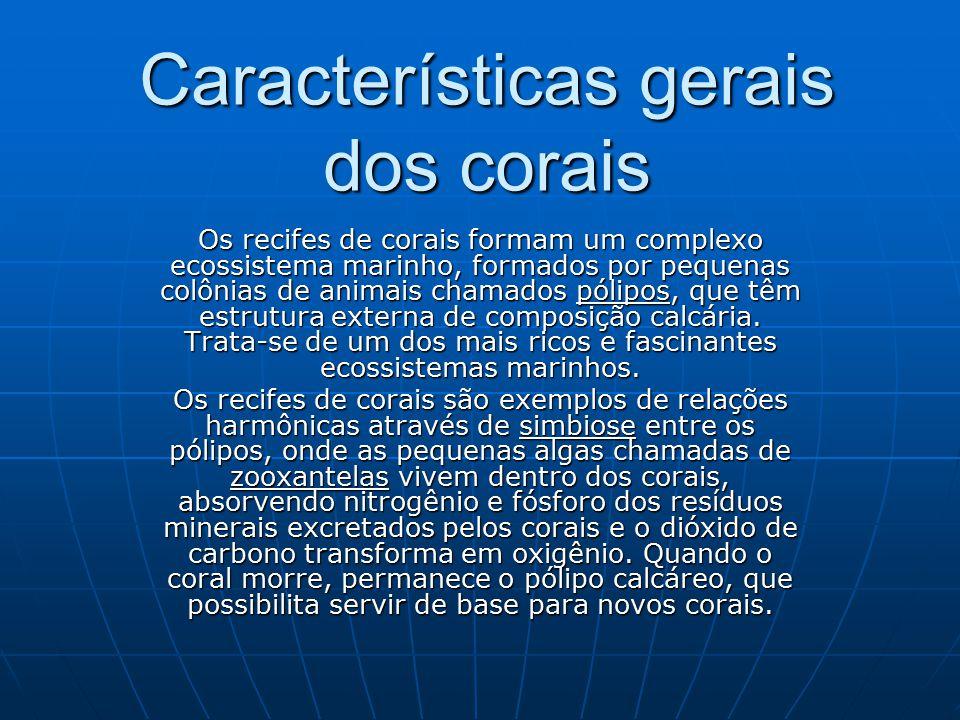 Características gerais dos corais