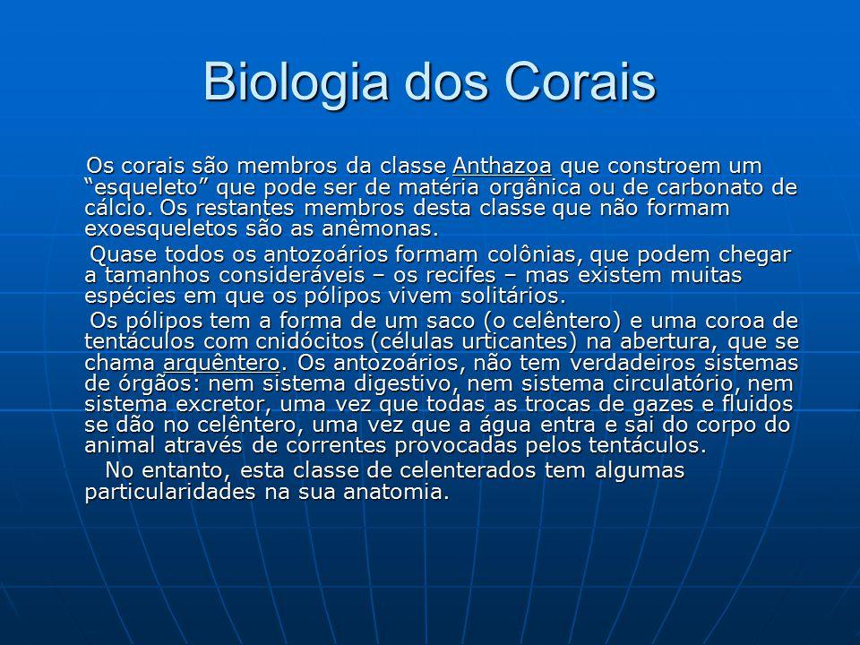 Biologia dos Corais